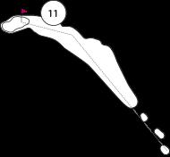 Parcours trou 11
