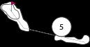Parcours trou 5